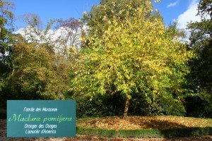 arbre parc rochegude