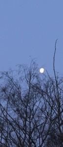troc luna
